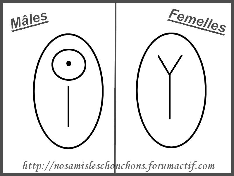 Les bébés: croissance,sevrage,mâle ou femelle?comment reconnaitre! Sans_t10