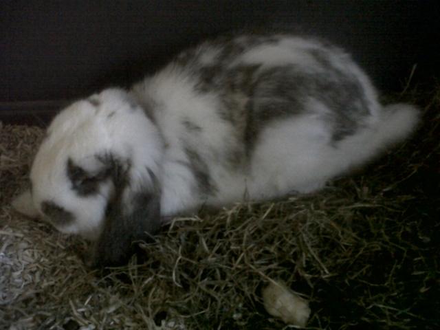 Ma future boule de poil : Lola Bunny - Page 3 Img-2010