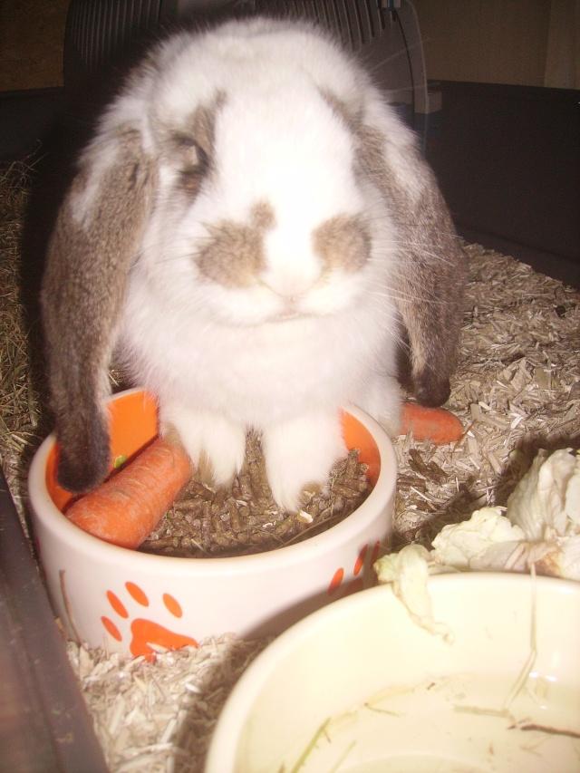 Ma future boule de poil : Lola Bunny - Page 3 Pict1010