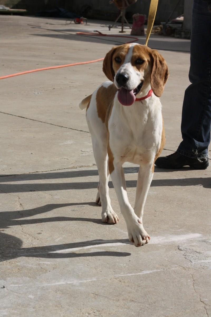 UNO - Mâle - X beagle - 4 ans Img_9011