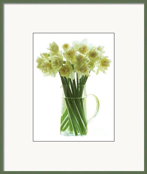 I've had a busy week! Daffod10