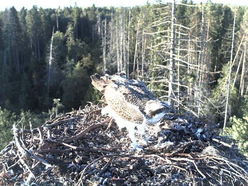 Ilmar's Nest 2013-299