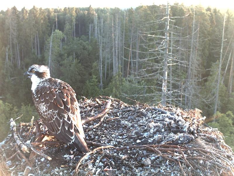 Ilmar's Nest 2013-325