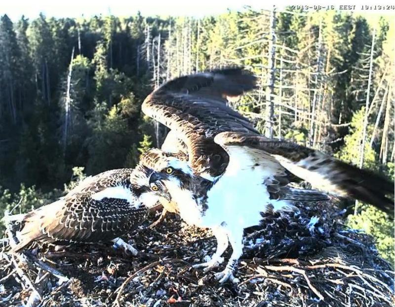 Ilmar's Nest Laaaab11