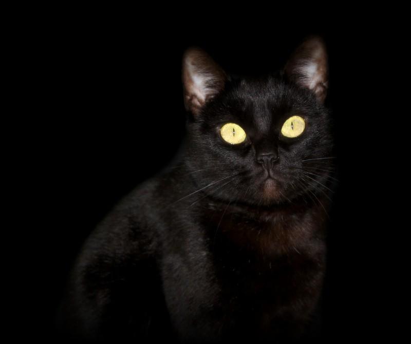 Chat noir Baggy_10
