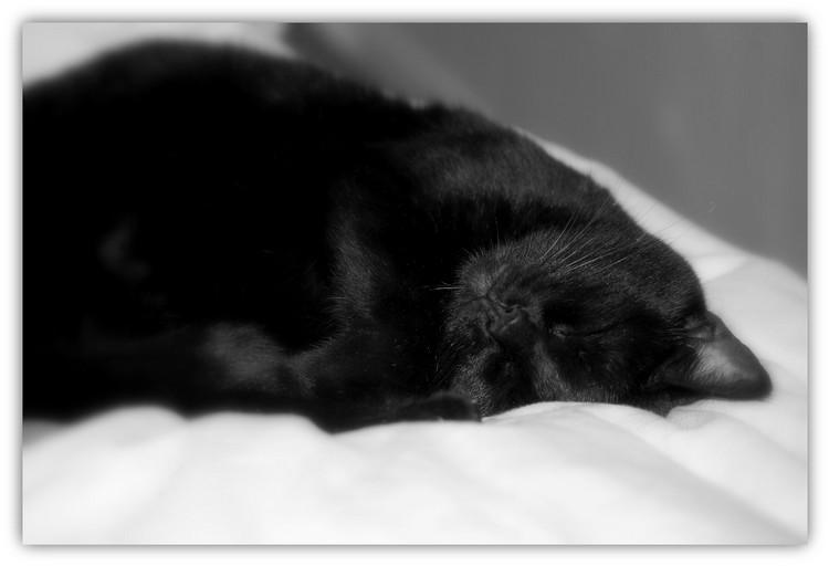 Chat noir Dsc07710