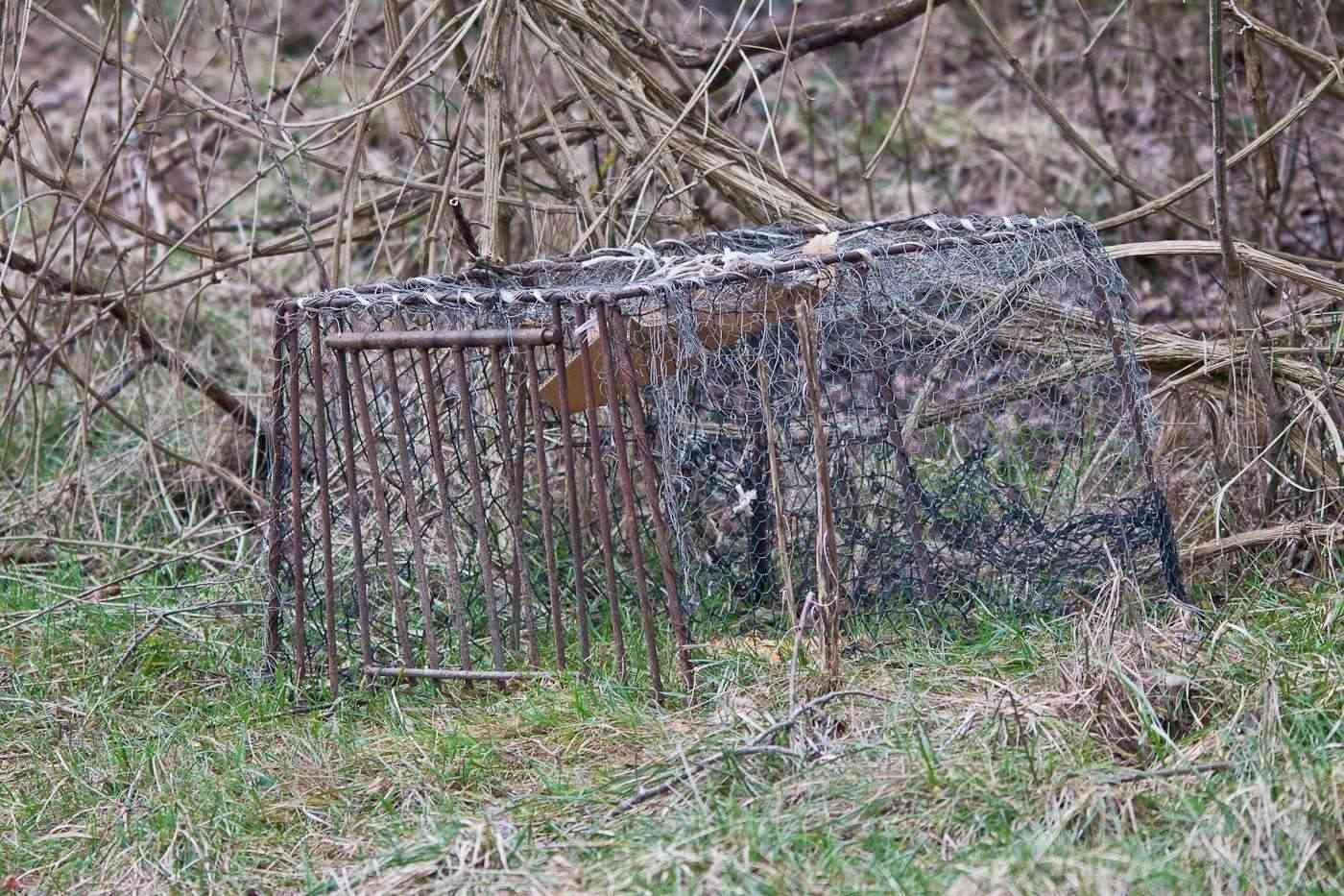 Una trappola nell'area di Cronovilla Img_3010