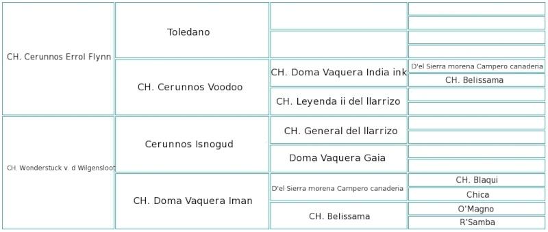 Cocolores Cara Mia Pedigr11