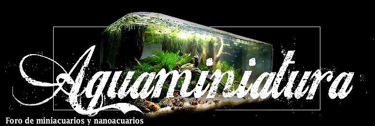Aquaminiatura - Foro de miniacuarios y nanoacuarios