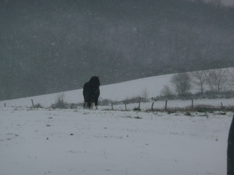 (Dept19) BIJOUX, Shetland, réservé par Lola1605 !!!! (Octobre 2012) - Page 5 Collne10