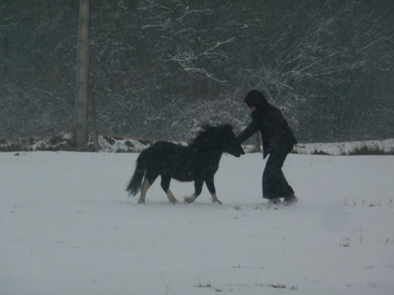 (Dept19) BIJOUX, Shetland, réservé par Lola1605 !!!! (Octobre 2012) - Page 5 Sou10