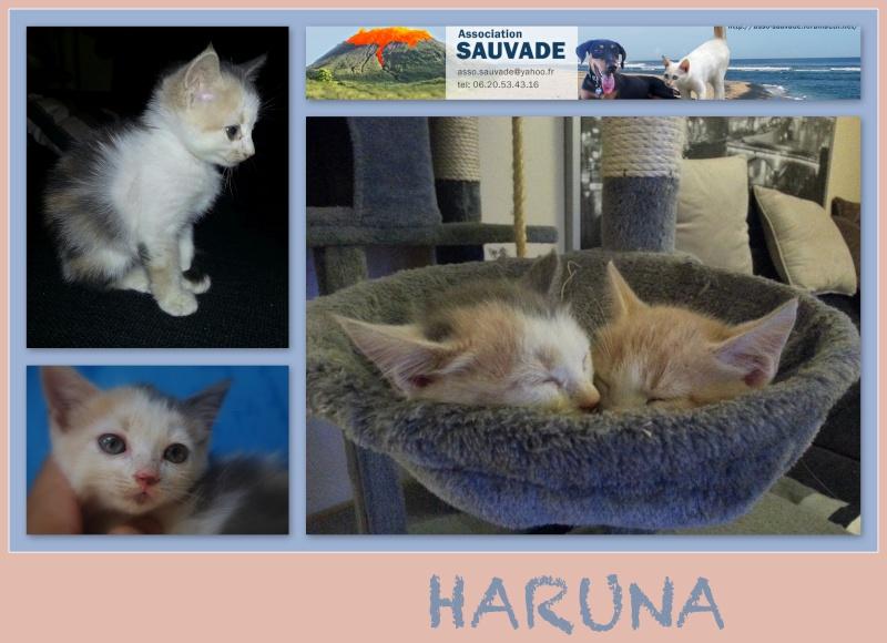 COQUIN et BELLA (Mozaik et Haruna) Haruna10