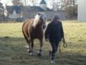Le monde du cheval. Dimanc10