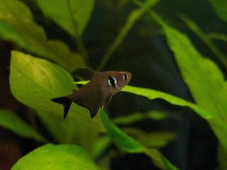 Les aquariums de Sychriscar P1080410