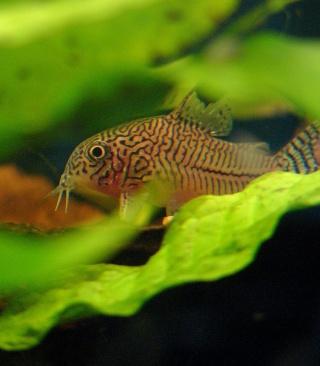 Les aquariums de Sychriscar P1110210
