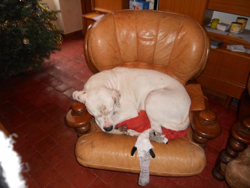 URGENCE pour ROCCO, Dogue Ar. de 5 ans - Bourgogne Dscn0010