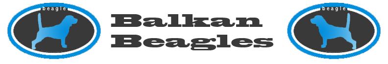 Balkan Beagles