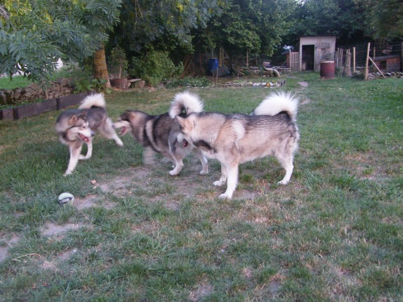 Nos loups grandissent, postez nous vos photos - Page 9 Dscf3910