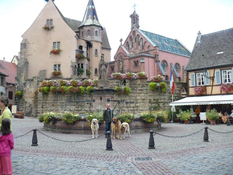 Entre Vosges et Alsace.....pérégrinations estivales... P1120513