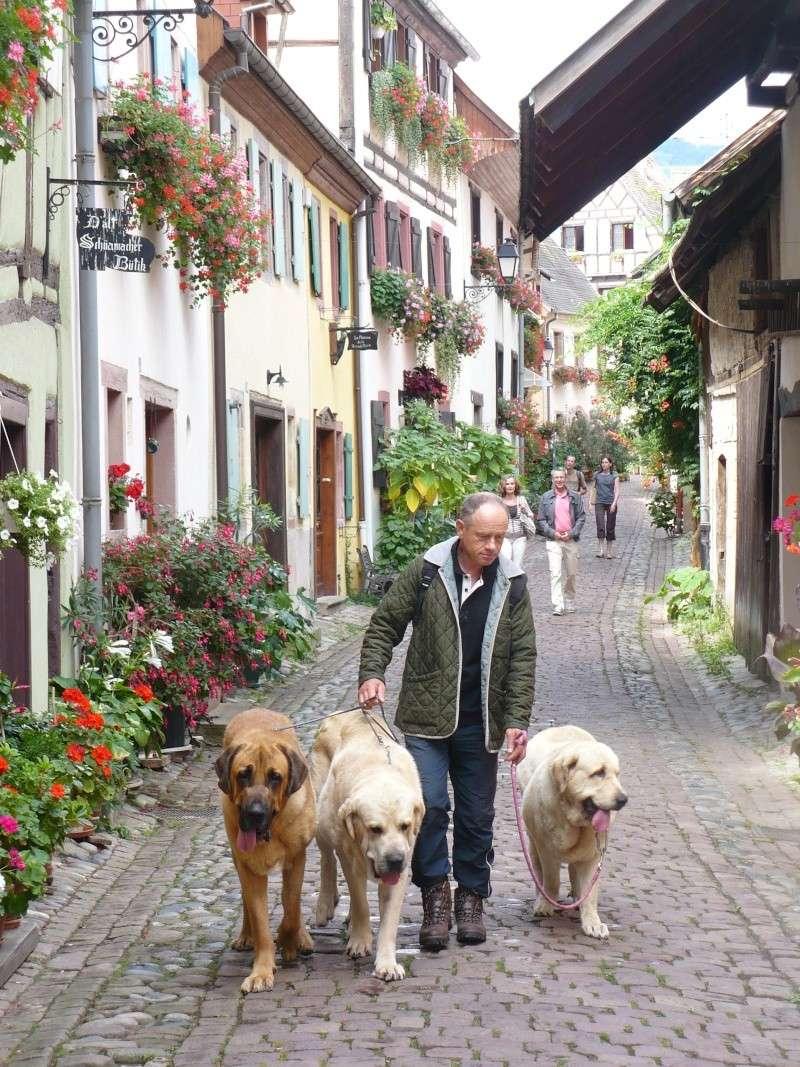 Entre Vosges et Alsace.....pérégrinations estivales... P1120514