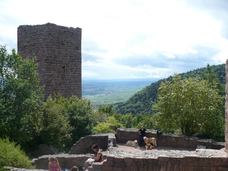 Entre Vosges et Alsace.....pérégrinations estivales... P1120515