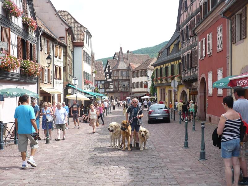Entre Vosges et Alsace.....pérégrinations estivales... P1120711