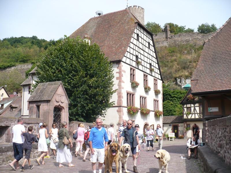 Entre Vosges et Alsace.....pérégrinations estivales... P1120712