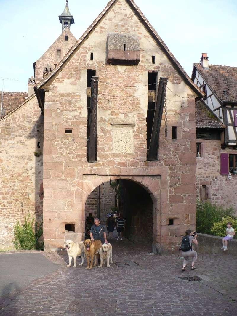 Entre Vosges et Alsace.....pérégrinations estivales... P1120713