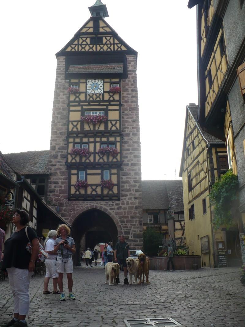 Entre Vosges et Alsace.....pérégrinations estivales... P1120714