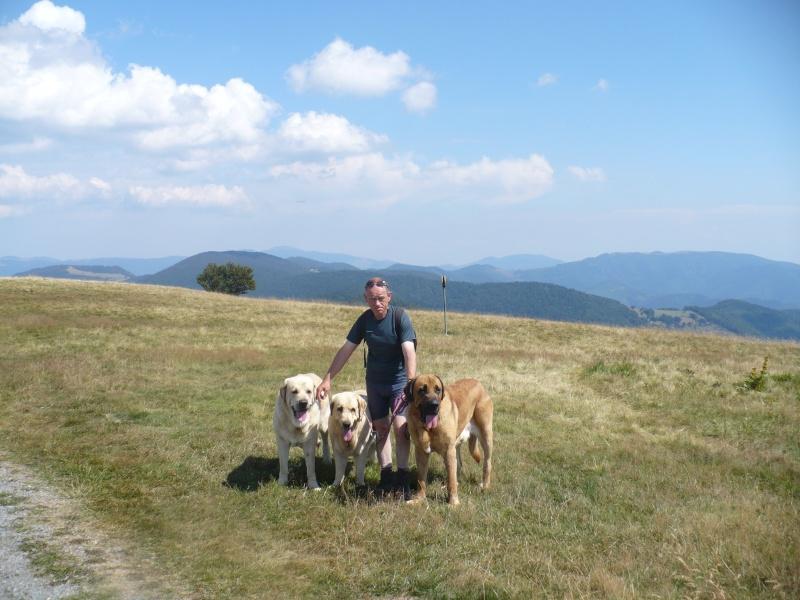 Entre Vosges et Alsace.....pérégrinations estivales... P1120810