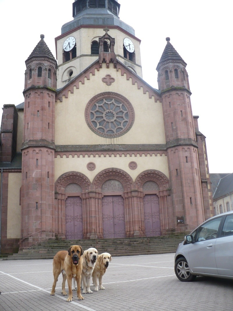 Entre Vosges et Alsace.....pérégrinations estivales... P1120811