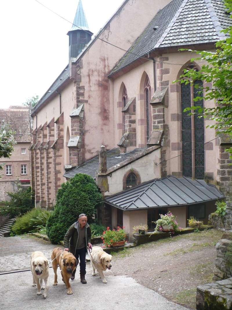 Entre Vosges et Alsace.....pérégrinations estivales... P1120814