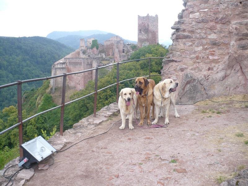 Entre Vosges et Alsace.....pérégrinations estivales... P1120912