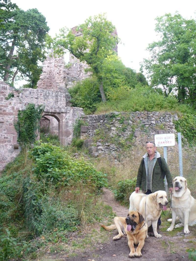 Entre Vosges et Alsace.....pérégrinations estivales... P1120913