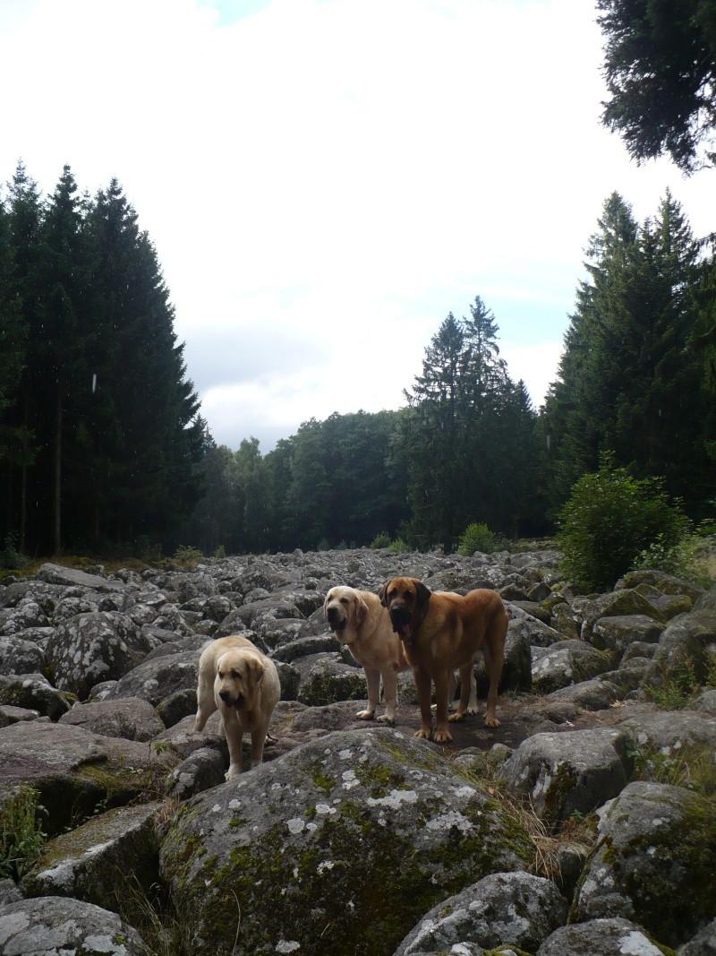 Entre Vosges et Alsace.....pérégrinations estivales... P1120915