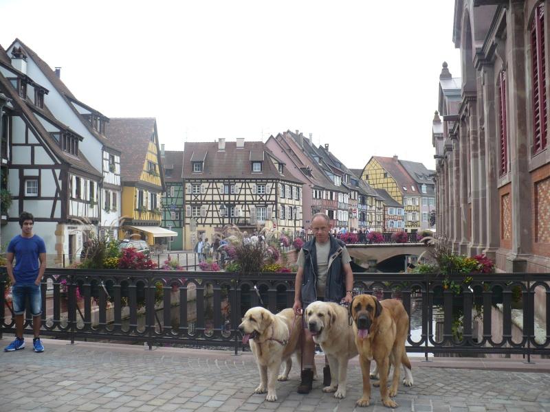 Entre Vosges et Alsace.....pérégrinations estivales... P1130111