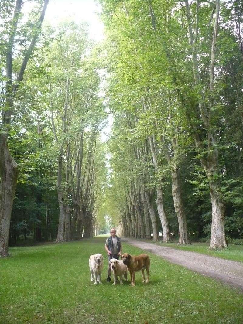 Entre Vosges et Alsace.....pérégrinations estivales... P1130112
