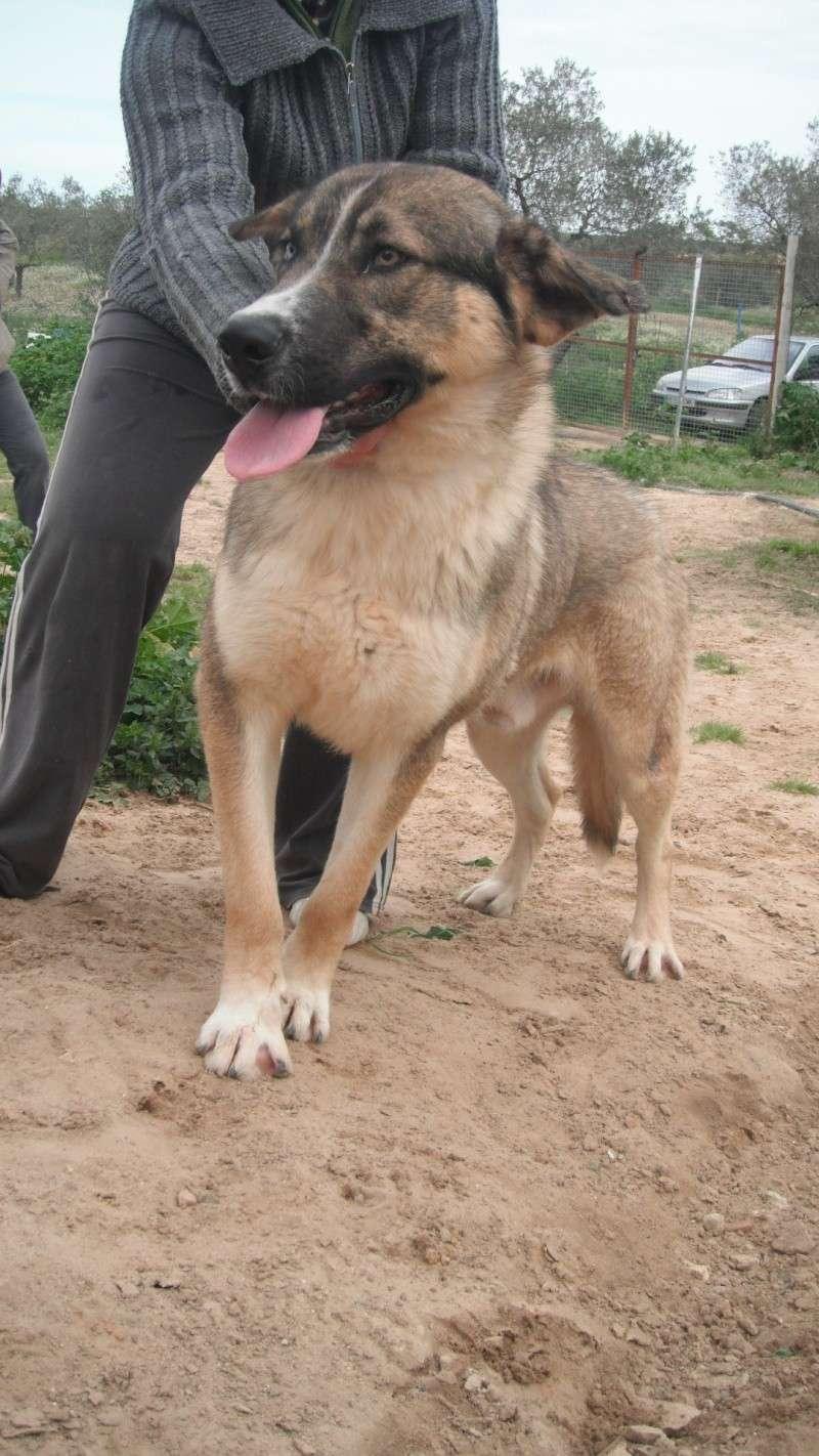 TREVIS   adopter !!! Dscf5011