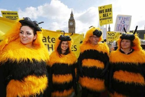 Les abeilles, témoins du bon état de notre environnement, disparaissent massivement 89740810