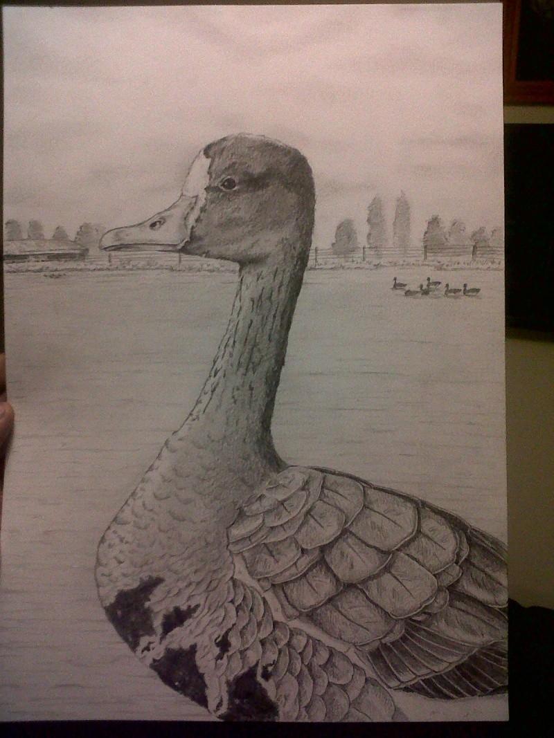 Mes dessins Img00224