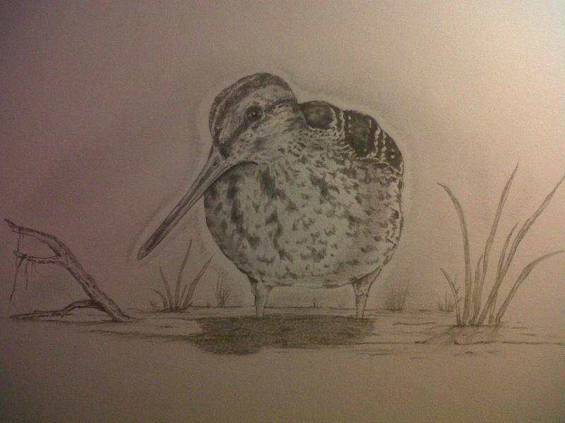 Mes dessins Img00226