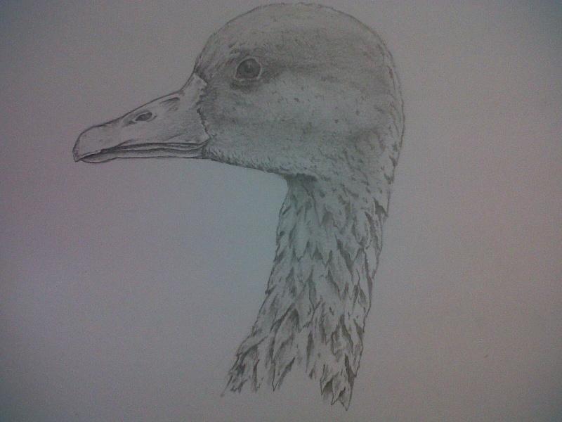 Mes dessins Img00227
