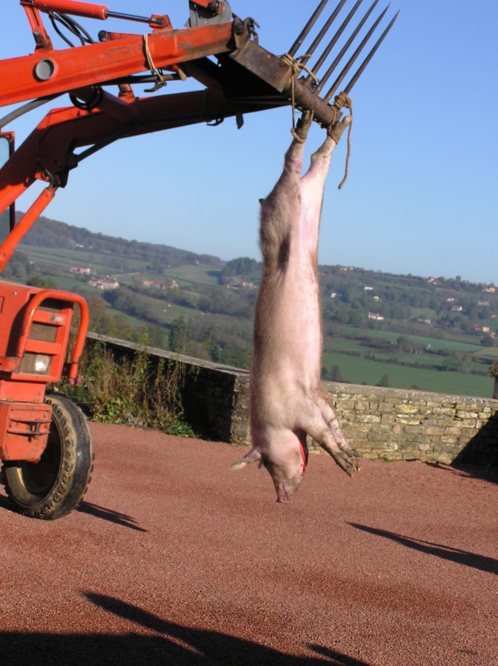 tuer le cochon - Page 2 P1010010