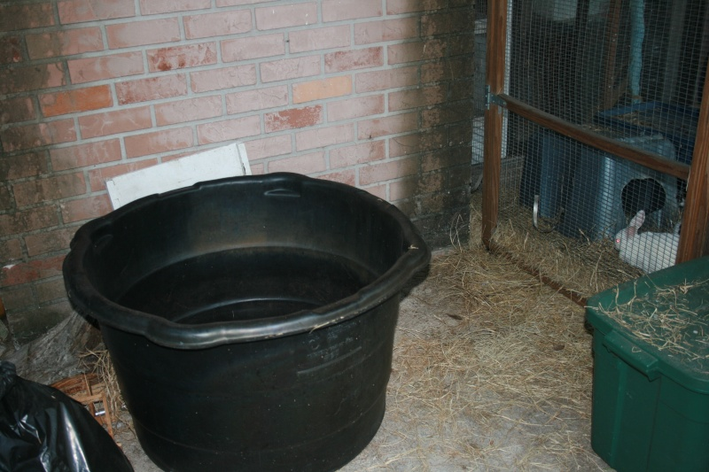 The new boar for our G-Pigs 01110