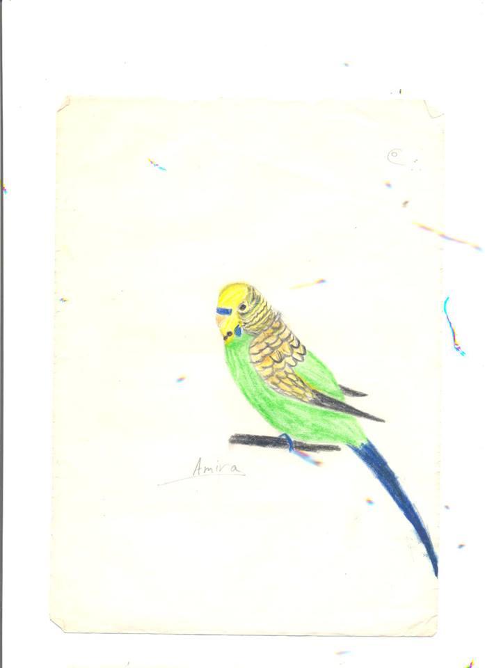 رسوماتي (مديرة المنتدي) 56004010