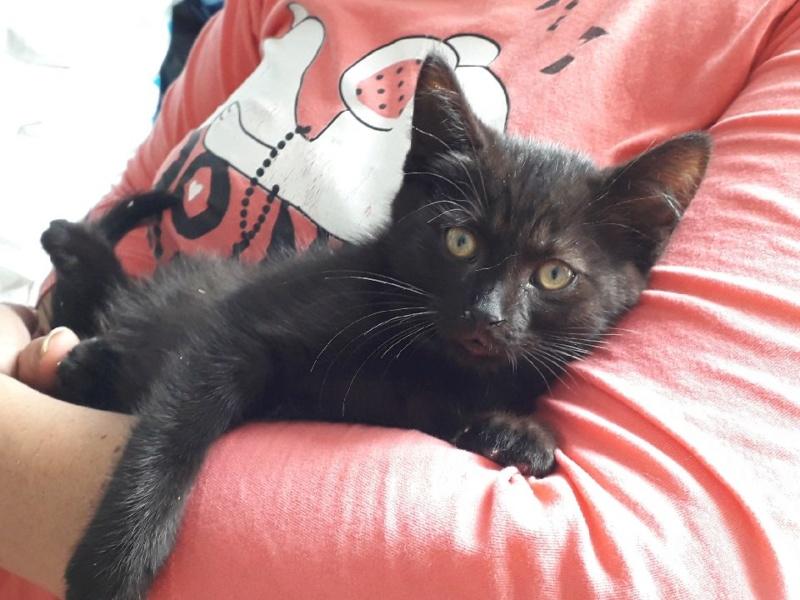 Oxana, chatonne noire, née le 03 mai 2018 Img_1117