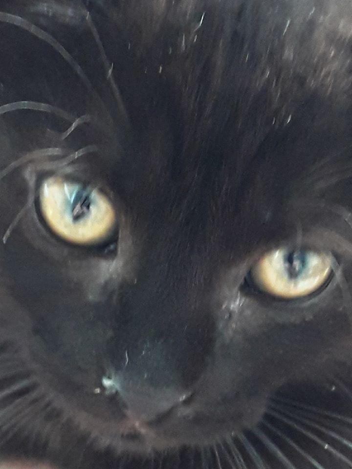 Oxana, chatonne noire, née le 03 mai 2018 Img_1118