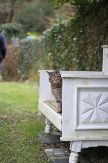 Idina, femelle tigrée, née le 01/01/13, chatte libre à Scaer Img_2121