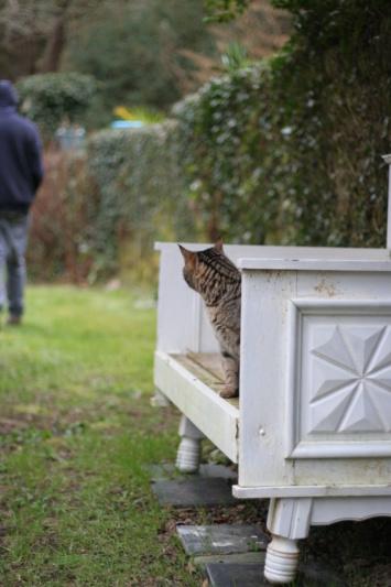 Idina, femelle tigrée, née le 01/01/13, chatte libre à Scaer Img_2123