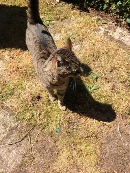 Idina, femelle tigrée, née le 01/01/13, chatte libre à Scaer - Page 2 Img_2642